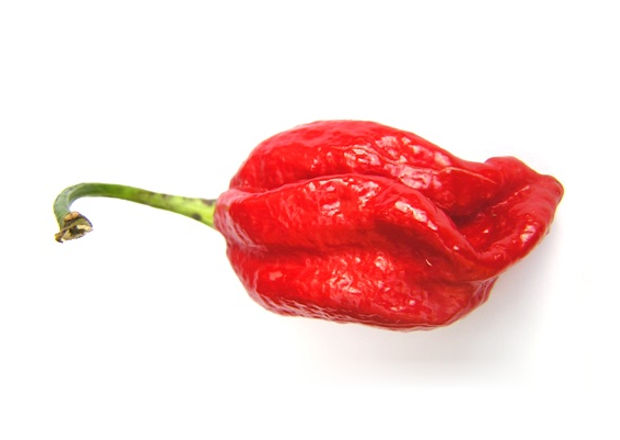 Red Naga Viper chile pepper with stem
